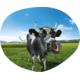 Gagnez des vacances en Suisse d'une valeur de CHF 3'800.-