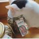 Testez gratuitement les croquettes saines & écologiques fabriquées en Suisse pour votre chat ou chien